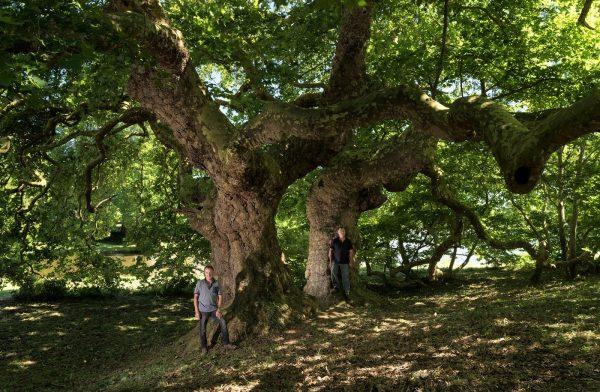 concours arbre remarquable 2018 loire-atlantique